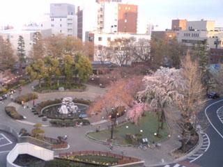 窓から撮影した区役所公園